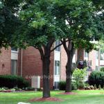 Arbor Heights Condo